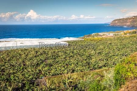 banana plantation on canary island tenerife