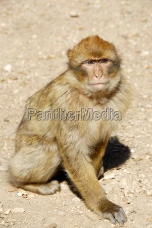 environment enviroment animal mammal africa animals