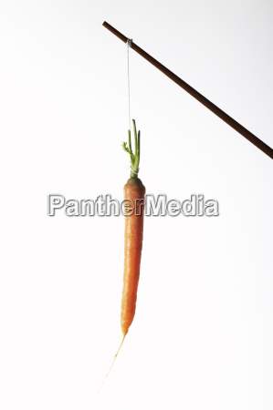 isolated optional studio pendant bait carrots