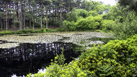 lake in new forest