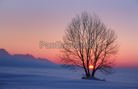 tree, silhouette, in, the, sunset, from - 24428586