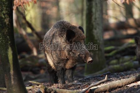 tree trees animal mammal fauna wild