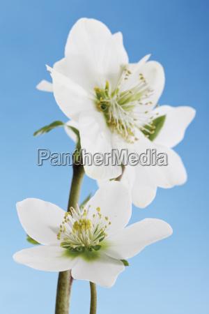 detail closeup flower plant bloom blossom