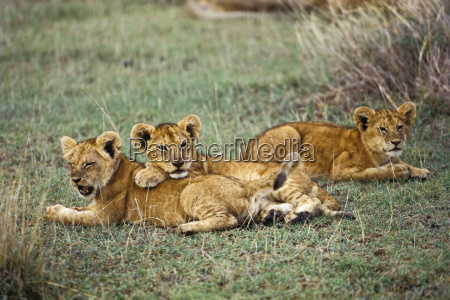 animal mammal national park africa animals