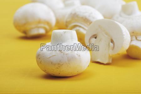 mushrooms eggs agaricus