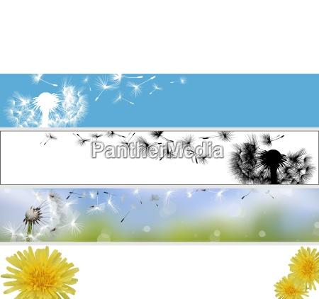 dandelion website banner collection