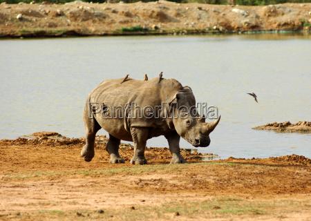 animal mammal fauna national park africa