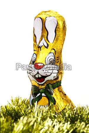 chocolate east bunny