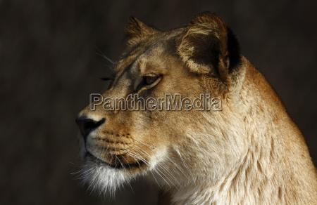 profile female closeup animal mammal fauna