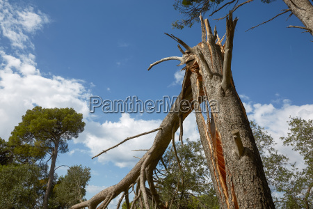 storm damage and broken tree in