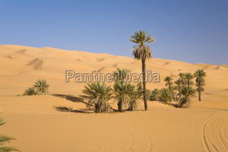 date palms phoenix spec in the