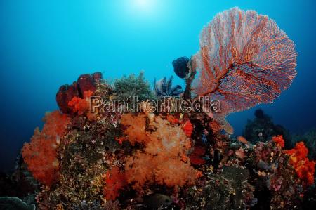 colorful coral reef komodo indian ocean
