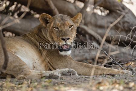 female animal mammal fauna national park