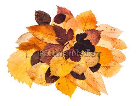 heap of various autumn fallen leaves