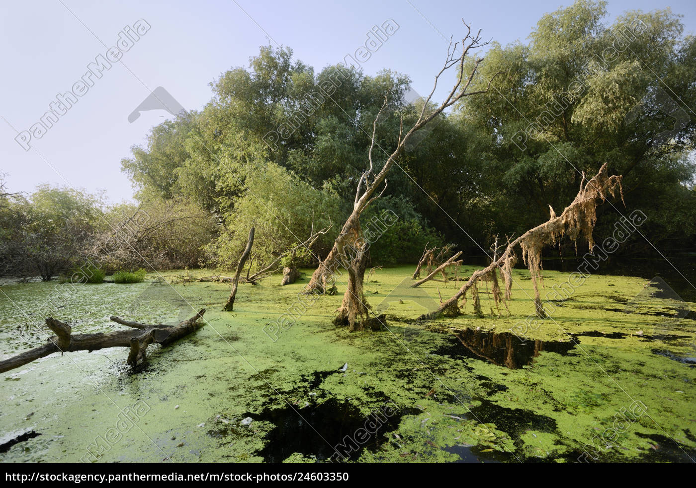 danube, delta, murighiol, romania, europe - 24603350