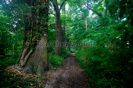 sights europe mood sightseeing deciduous forest