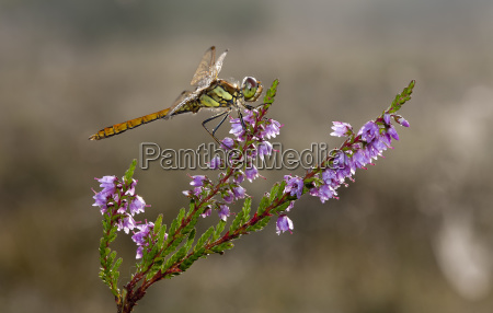 animal insect flower plant insects fauna