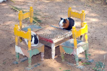 dining table furniture animal pet mammal