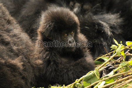 closeup animal mammal fauna national park