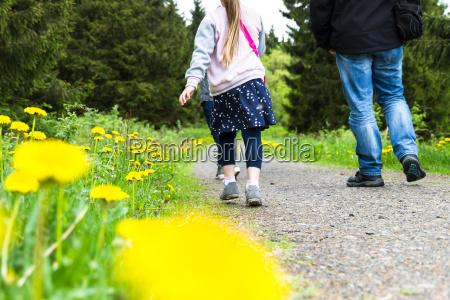 walking along dandelion meadows on a