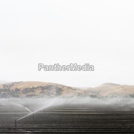 irrigation sprinklers in the salinas valley