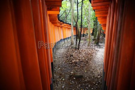 tori gates at the fushimi inari