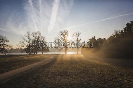 germany brandenburg potsdam park with trees