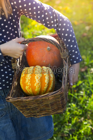 girl carrying basket with pumpkins in