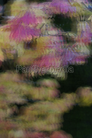 close up of blurred autumn leaves