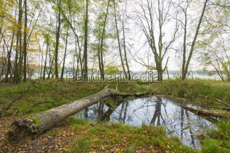 pond with fallen tree in forest