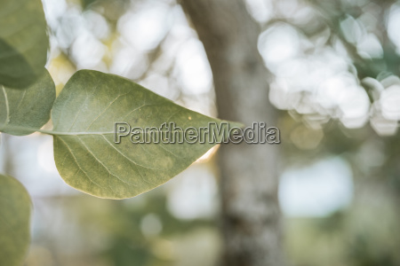 close up of leaves growing on