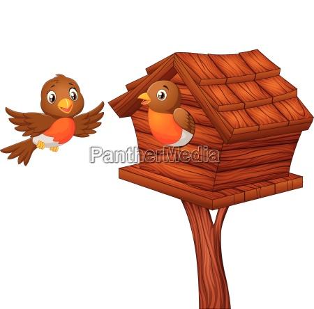 robin bird at nesting box