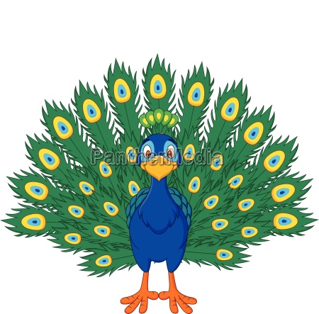 cartoon beautiful peacock