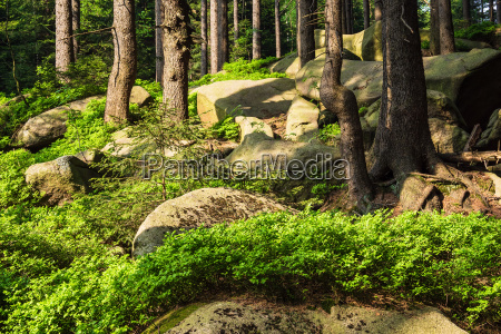 landscape with trees and rocks in