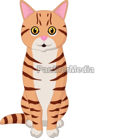 cartoon funny cat isolated on white