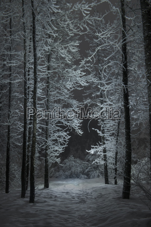 tranquil view of snow covered trees