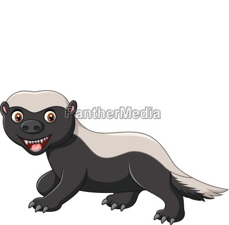cartoon funny honey badger isolated on