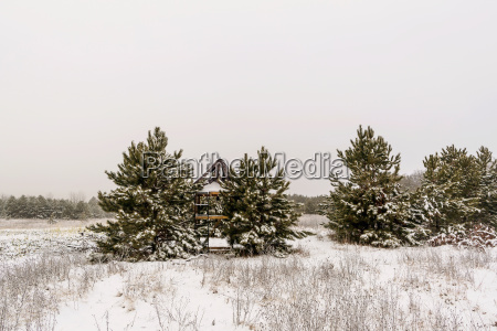 scenic view of trees on snow