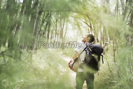 rear view of hiker in forest