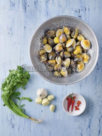 italian vongole clams in white wine