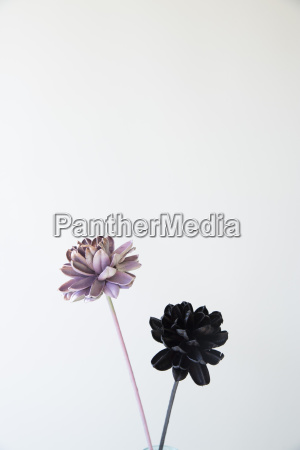 painted flowers against white background