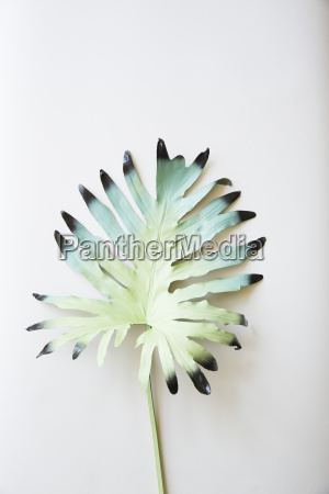 painted leaf on white background
