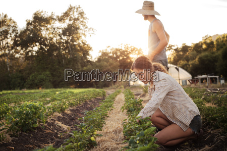 female farmer working on field while