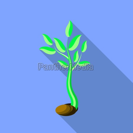 plant growth little green sprout seedling