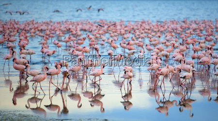 reflection of large flock of pink