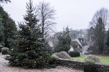 a winter garden a tall pine