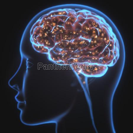 powerful mind brain x ray