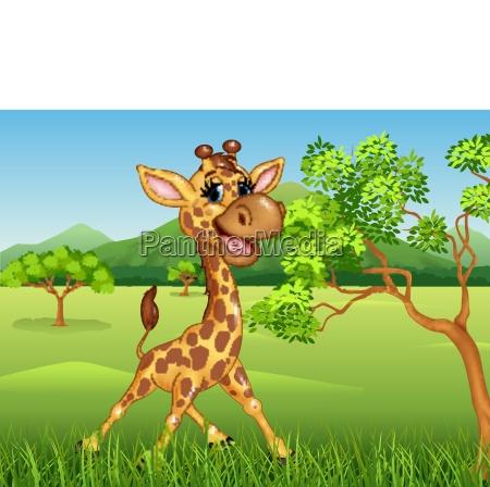 cute giraffe in the jungle