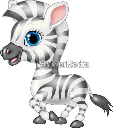 cute zebra posing isolated on white