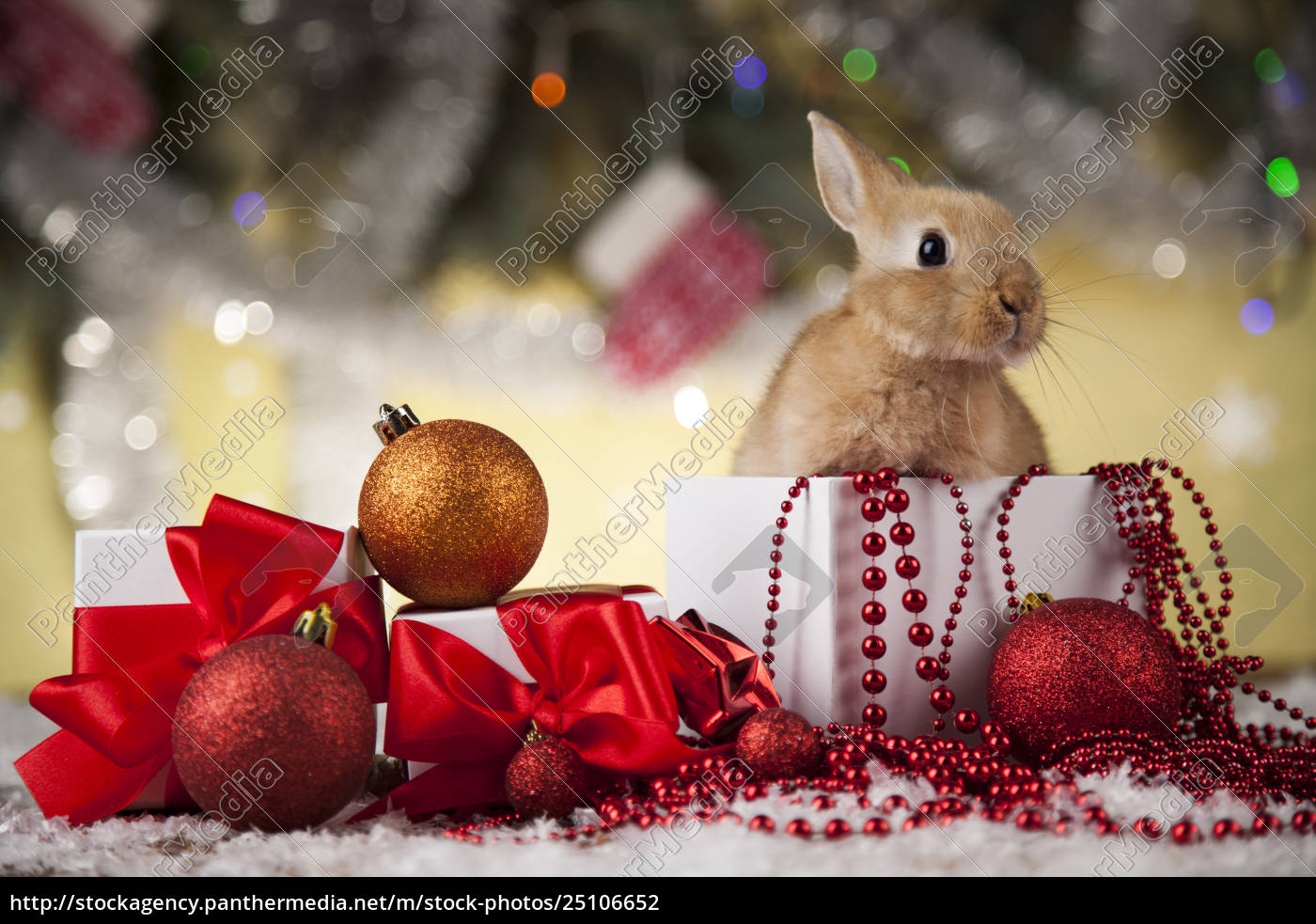 little, santa, bunny, on, christmas, background - 25106652